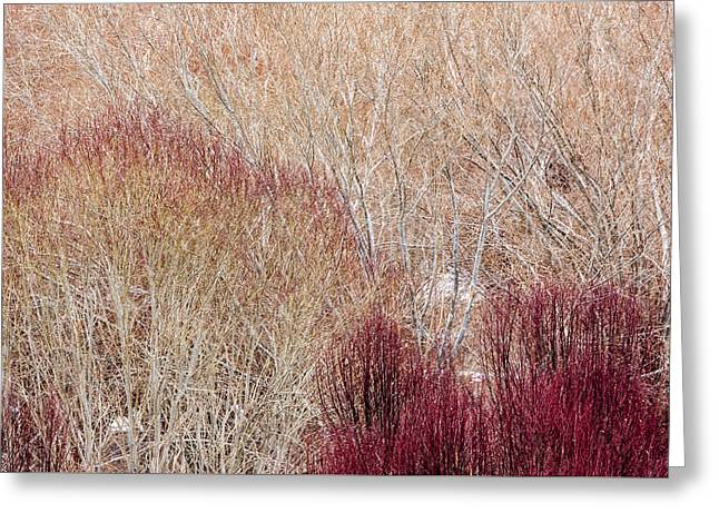 Willows In Winter Greeting Card
