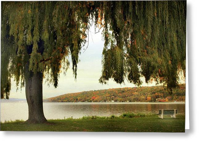 Willows Of Stewart Park Greeting Card