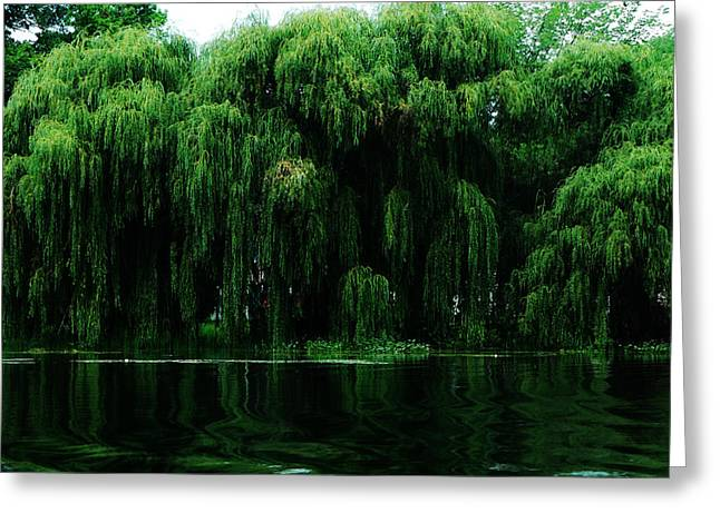 Willows Weeping Greeting Card by Simone Hester