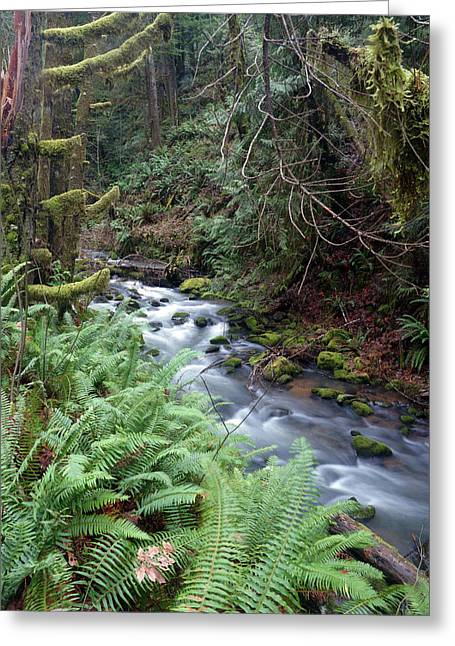 Greeting Card featuring the photograph Wilson Creek #14 by Ben Upham III