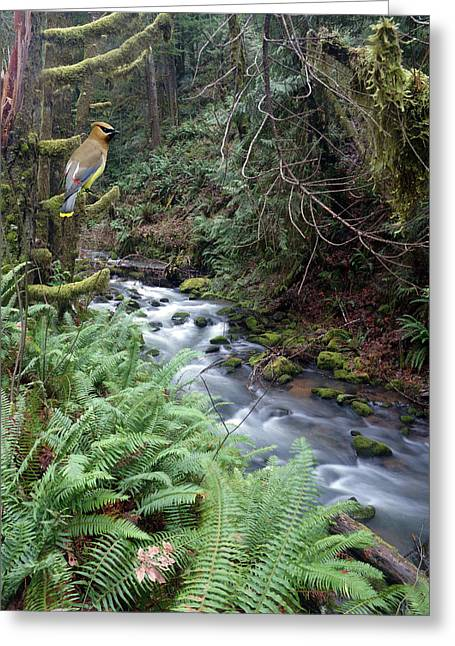 Greeting Card featuring the photograph Wilson Creek #14 With Added Cedar Waxwing by Ben Upham III