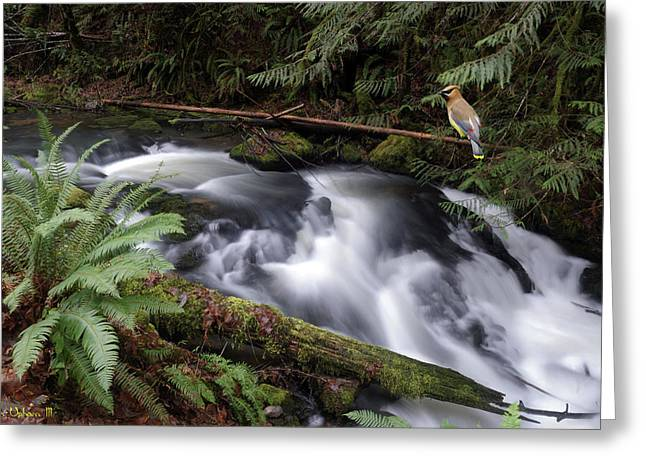 Greeting Card featuring the photograph Wilson Creek #18 With Added Cedar Waxwing by Ben Upham III