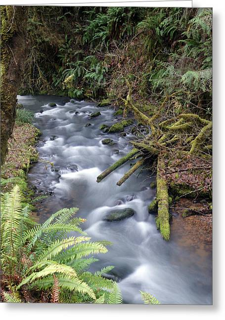 Greeting Card featuring the photograph Wilson Creek #20 by Ben Upham III