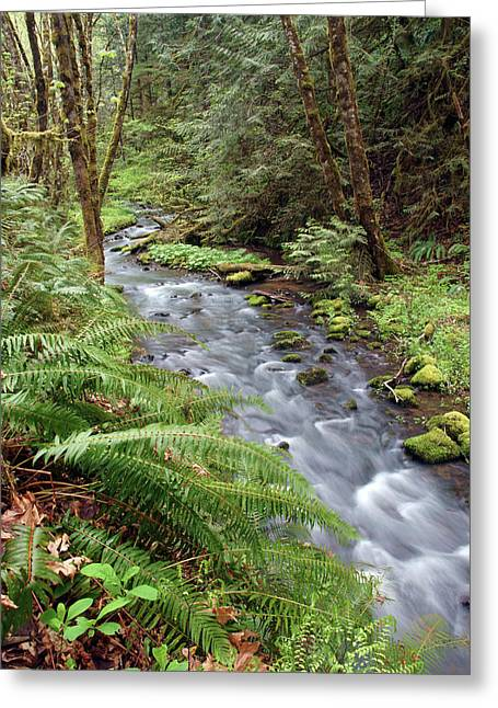 Greeting Card featuring the photograph Wilson Creek #21 by Ben Upham III