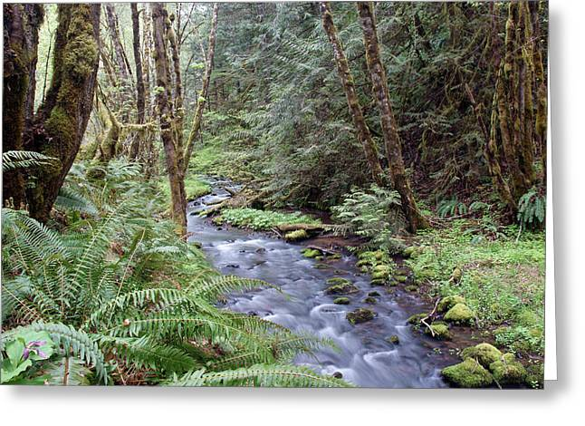 Greeting Card featuring the photograph Wilson Creek #22 by Ben Upham III