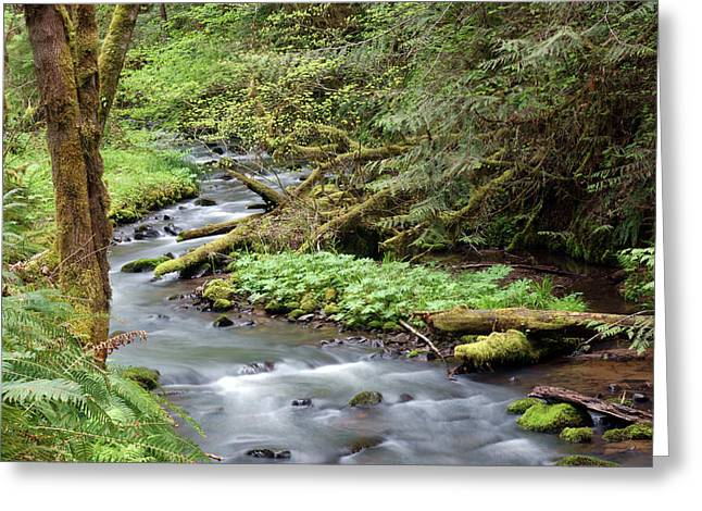 Greeting Card featuring the photograph Wilson Creek #24 by Ben Upham III
