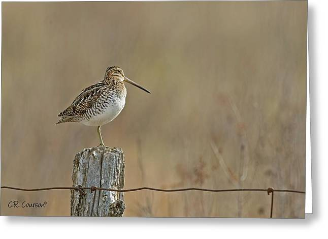 Wilson's Snipe On A Post Greeting Card