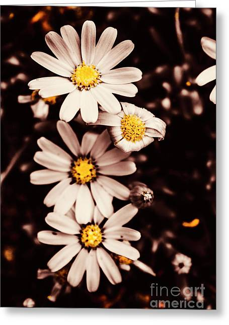 Wilting And Blooming Floral Daisies Greeting Card