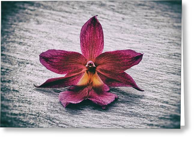 Wilting Orchid  Greeting Card