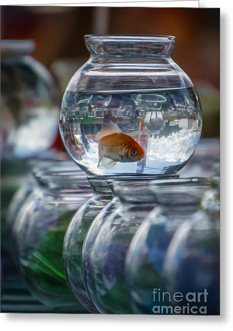 Win A Goldfish Greeting Card