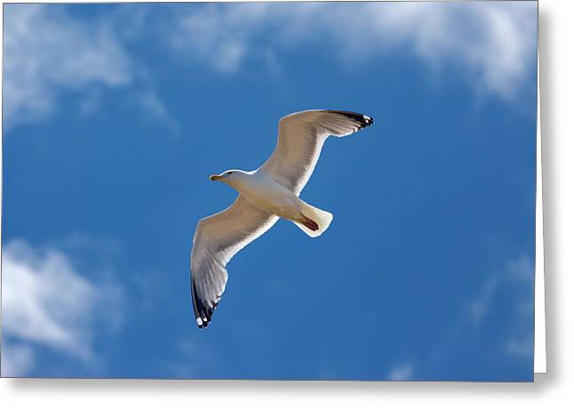 Wind Beneath My Wings Greeting Card by Murray Bloom