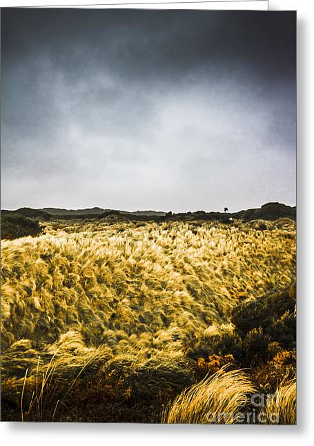Wind Blown Grassland  Greeting Card by Jorgo Photography - Wall Art Gallery