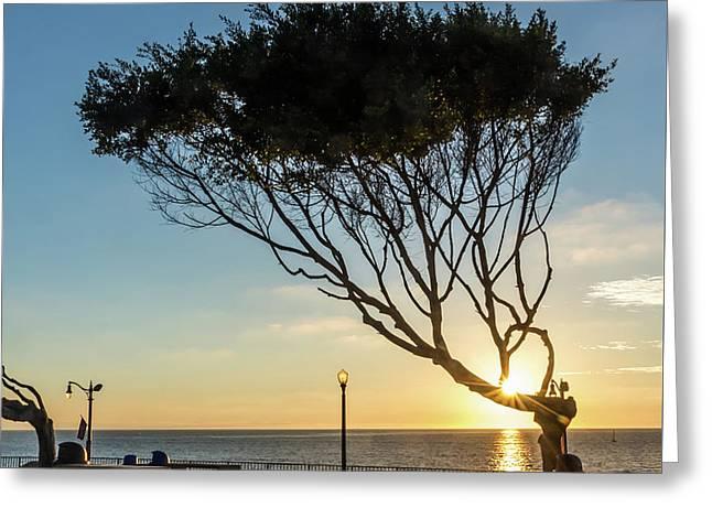 Wind Blown Tree Greeting Card