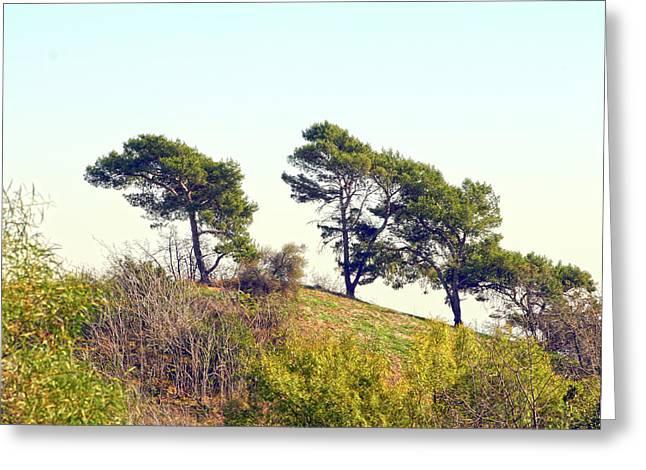 Wind Blown Trees Greeting Card
