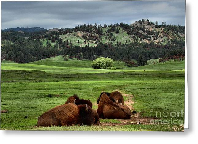 Wind Cave Bison Greeting Card