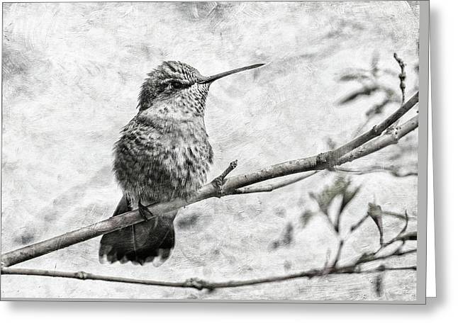 Greeting Card featuring the photograph Wind In Her Feathers by Angie Vogel