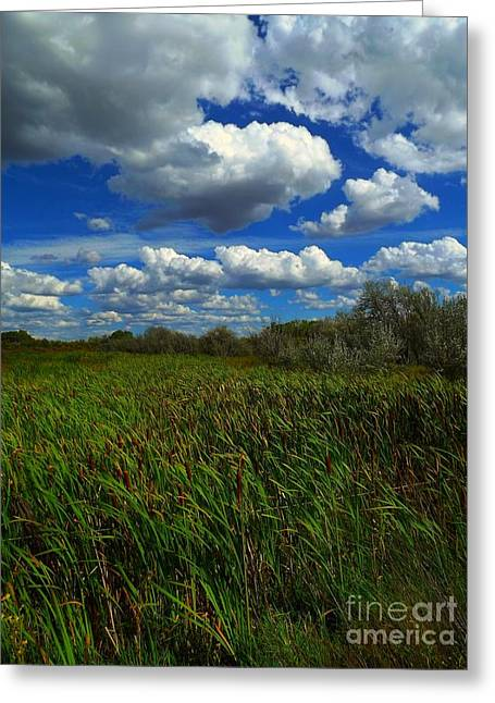 Wind In The Cattails Greeting Card by Annie Gibbons