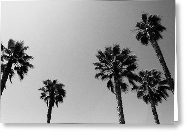 Wind In The Palms- By Linda Woods Greeting Card