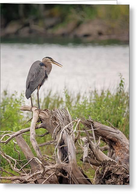 Wind River Heron Greeting Card