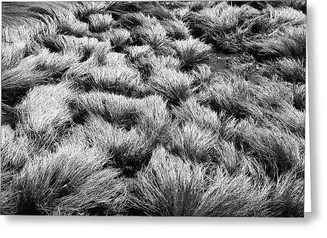 Windblown Grass Greeting Card