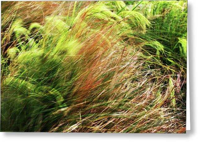 Windblown Grasses Greeting Card