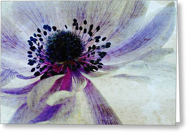 Windflower Greeting Card