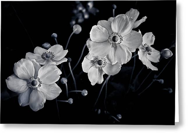 Windflowers Encore Greeting Card by Maggie Terlecki