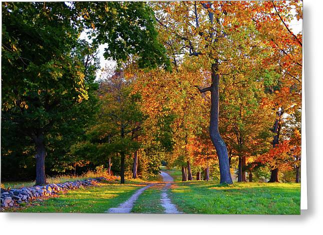 Winding Road In Autumn Greeting Card