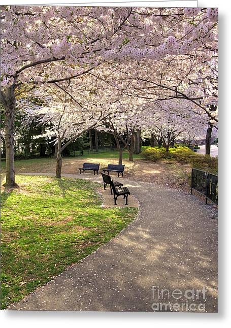 Winding Trail To The Tidal Basin Greeting Card