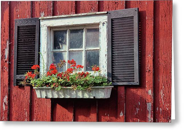 Window Box Greeting Card by Dressage Design