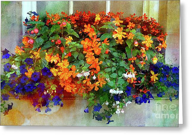 Window Box In Bath 2 Greeting Card