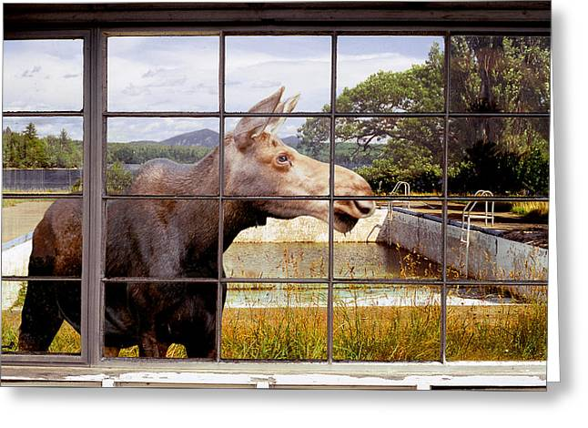 Window - Moosehead Lake Greeting Card by Peter J Sucy