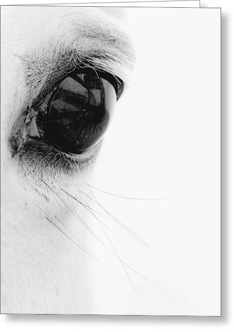 Animal Photographs Greeting Cards - Window to the Soul Greeting Card by Ron  McGinnis