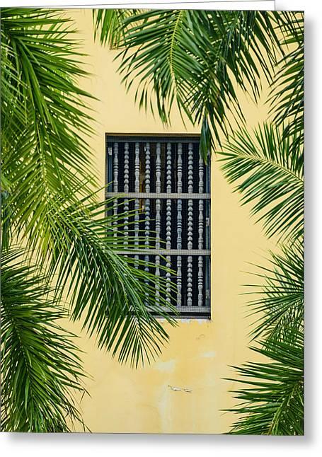 Window With Palm Leaves Greeting Card by Oscar Gutierrez