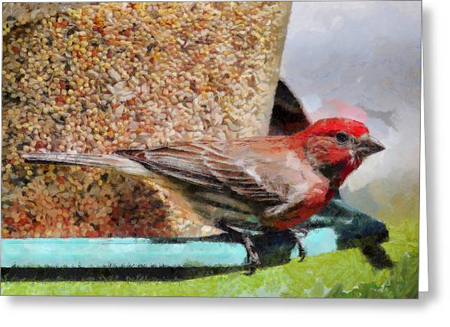 Windsor House Finch Greeting Card