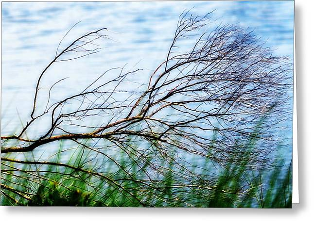 Windswept Branch At Water's Edge At St. Marks Greeting Card