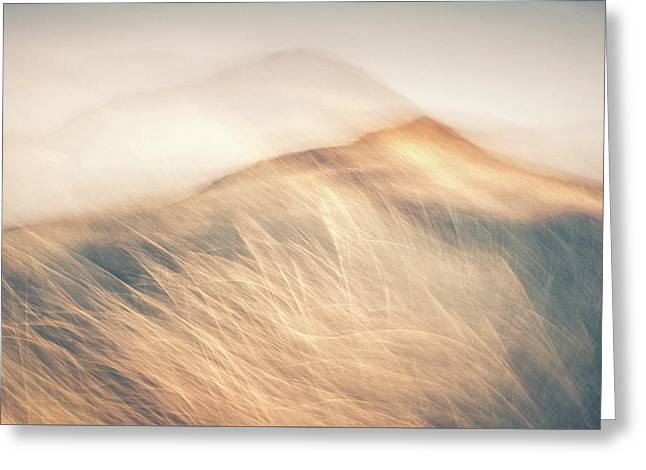 Windswept Greeting Card by Chris Dale