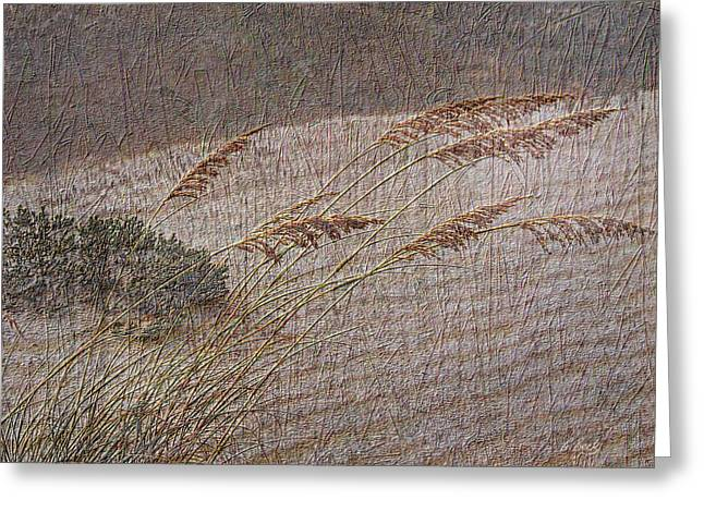 Windswept Greeting Card by Gordon Beck