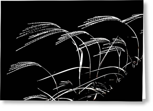Windswept Grasses Greeting Card