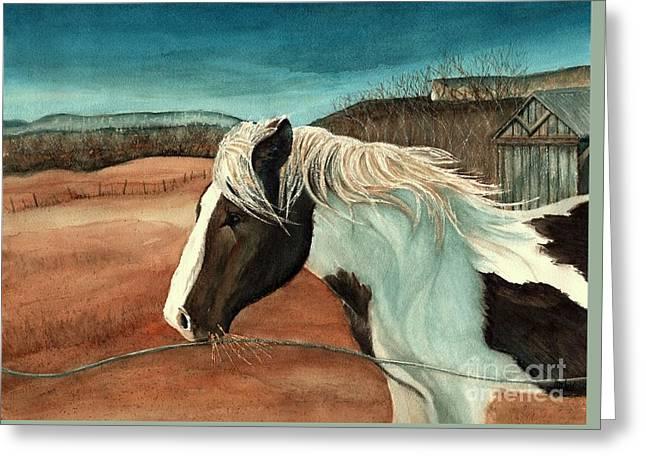 Windswept - Paint Horse - Shawangunk Greeting Card by Janine Riley