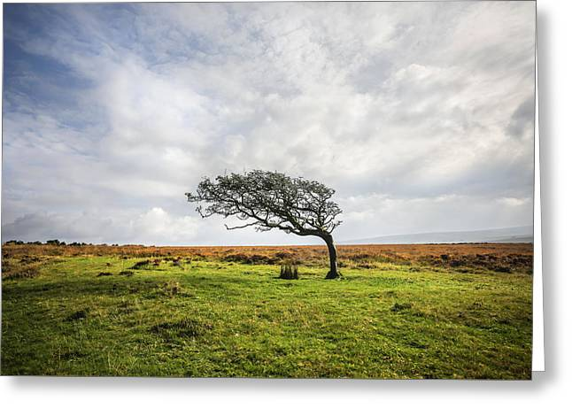 Windswept Tree Greeting Card
