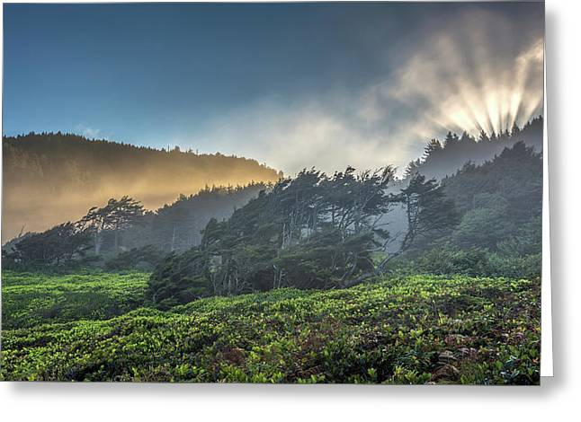 Greeting Card featuring the photograph Windswept Trees On The Oregon Coast by Pierre Leclerc Photography