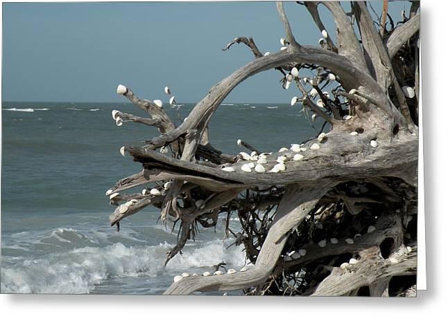 Windy Sea Greeting Card by Rosalie Scanlon
