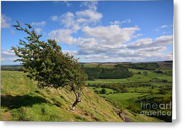 Windy Tops Greeting Card by Nichola Denny
