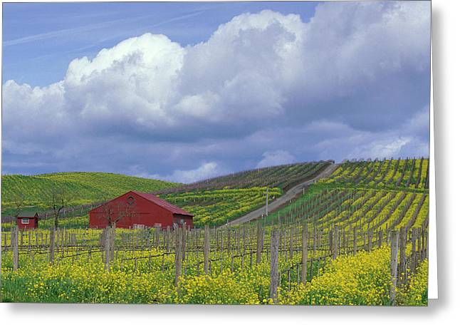Wine Country, California Greeting Card
