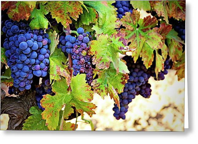 Wine Country - Napa Valley California Photography Greeting Card by Melanie Alexandra Price
