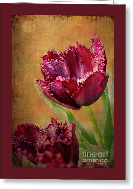Wine Dark Tulips From My Garden Greeting Card