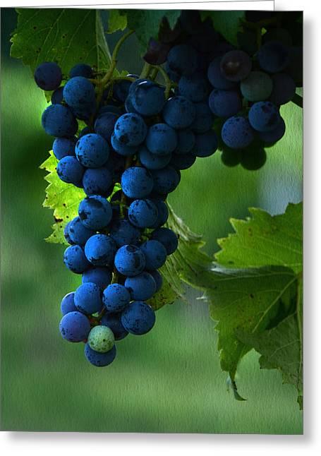 Wine Grapes Greeting Card by Ann Bridges