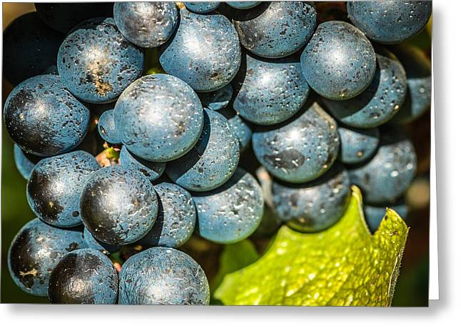 Wine Grapes Greeting Card by Optical Playground By MP Ray