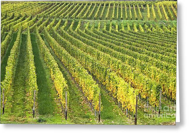Wine Growing Greeting Card by Heiko Koehrer-Wagner